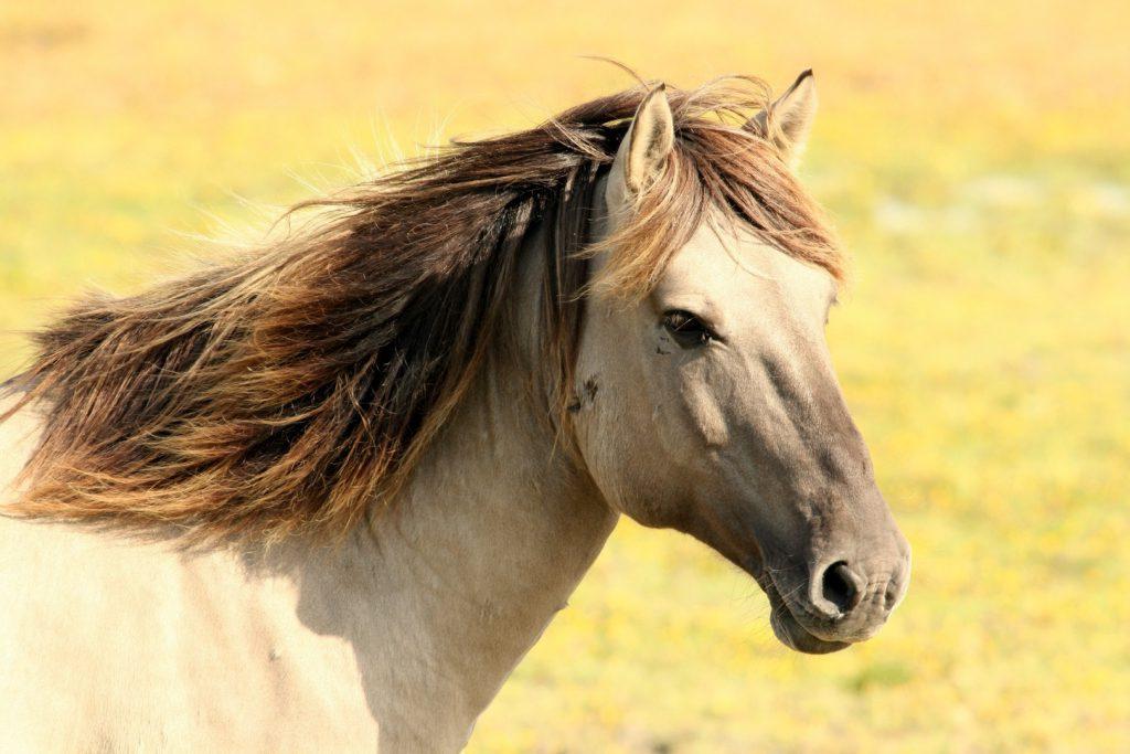 Letselschade paard, letselschade veroorzaakt door een paard, val van paard, paardenbeet
