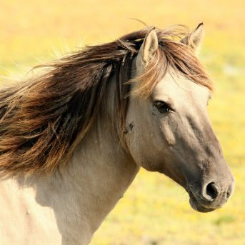 Letselschade paard