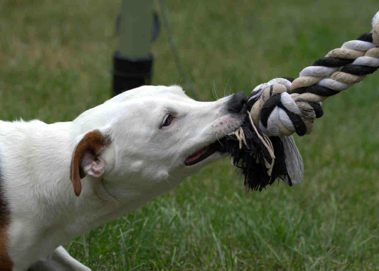 smartengeld hondenbeet, smartengeld gebeten door hond, hoeveel smartengeld na hondenbeet